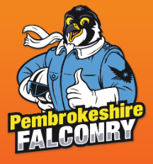 Pembrokshire Falconry, 10 miles from Mountain Farm http://www.pembrokeshire-falconry.co.uk/flying-displays/