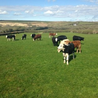 mountain-farm-cattle