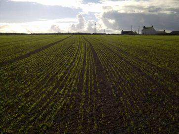 mountain-farm-trial-plots