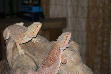 The Reptile Experience, 1 mile from Mountain Farm http://reptile-experience.co.uk/
